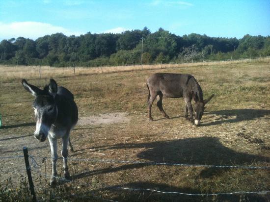 Le Clos Marie : les ânes