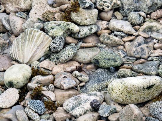 Playa Blanca Condominiums: Washed up coral on the beach at Half Moon Bay.