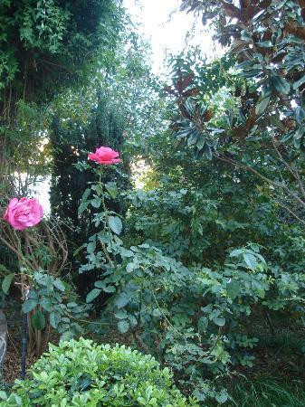 Hotel Kalemi: Garden.