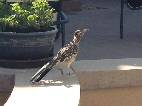 Marriott's Shadow Ridge: Roadrunner