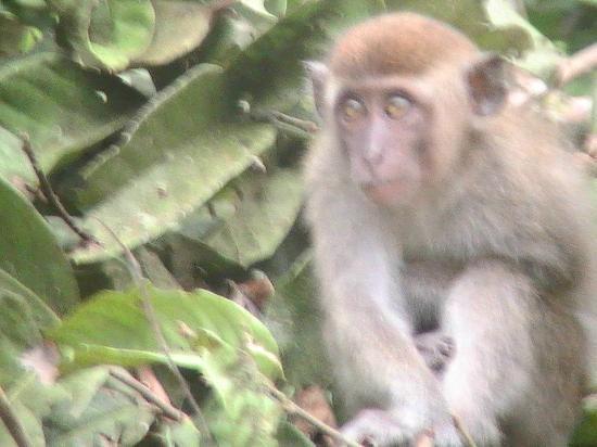 Sukau Rainforest Lodge: more tourists