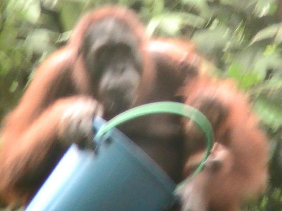 Sukau Rainforest Lodge: grubs up