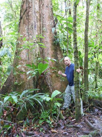 Rio Celeste Hideaway Hotel: Really big tree!