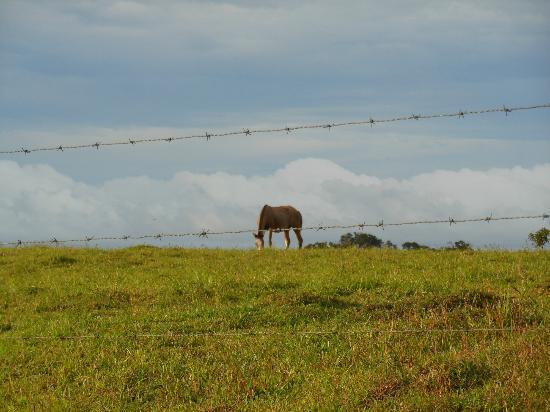 Rio Celeste Hideaway Hotel: Horse