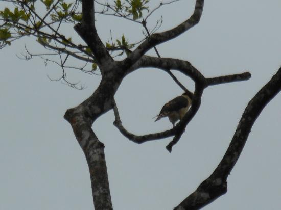 هوتل ريو سيليست هايد واي: Hawk 