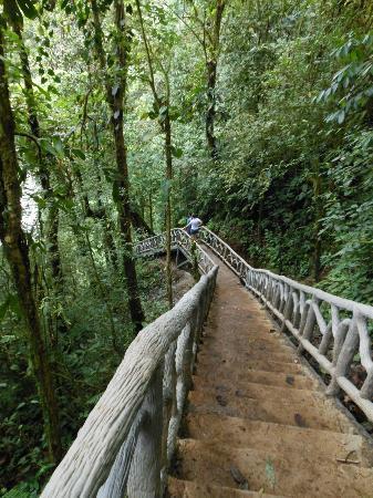 Rio Celeste Hideaway Hotel: Stairs to Rio Celeste waterfall