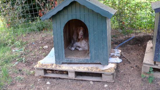 Terre di Nano: Resident Doggie