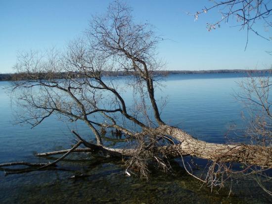 Tudhope Park : Driftwood