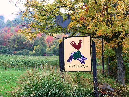Watts Roost Vineyard: Our greeting!