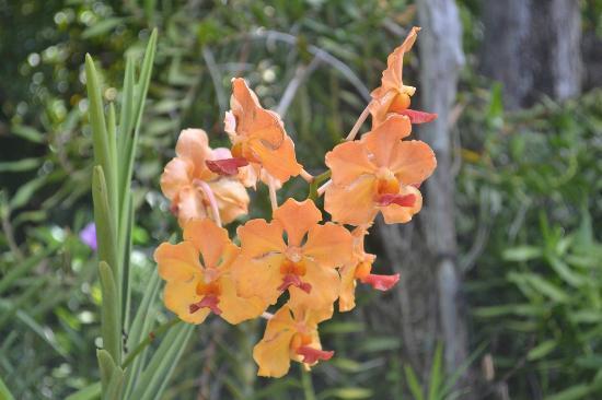 Plante Tropicale Picture Of Jardin Botanique De Deshaies Deshaies Tripadvisor