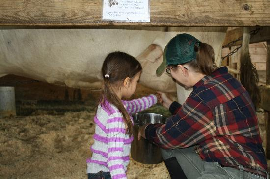 Shelburne Farms: Fun milking the cow.