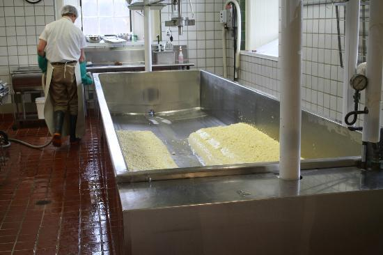 Shelburne Farms: Cheesemaking process.