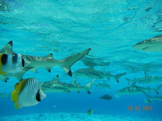 Raanui Tours: fish