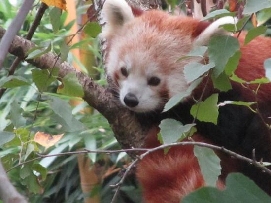 Bussolengo, Italy: panda rosso