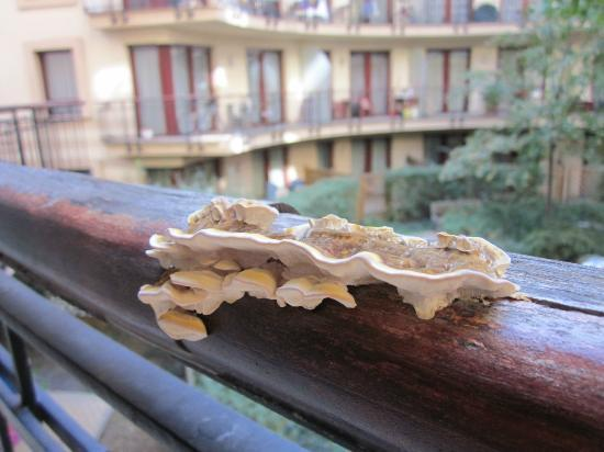 Town Hall Apartments: A weird mushroom on the balcony