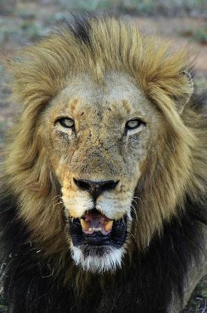 Tangala Safari Camp: Royal company