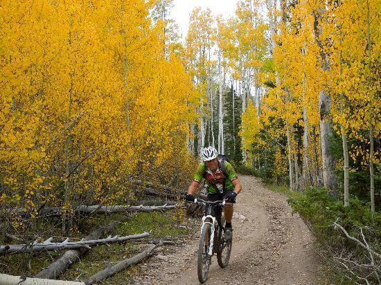Bunker Creek Trail: Aspens turning