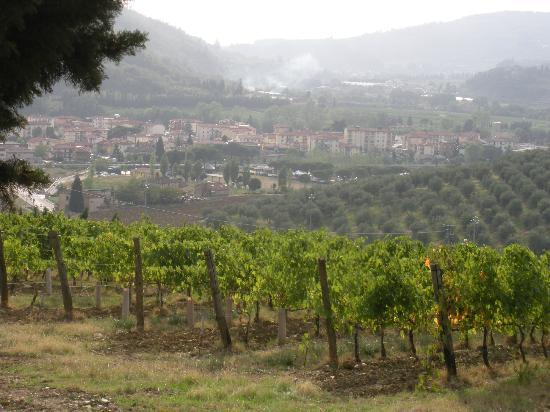 Podere Vignola: The vineyard with the town of Sieci below