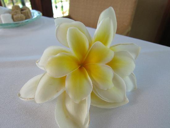 The Terrace Restaurant: Island flower