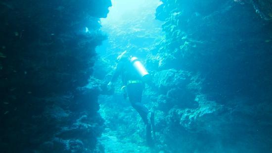 Pro Dive Lord Howe Island: Dive Site 'The Arch' Lord Howe Island