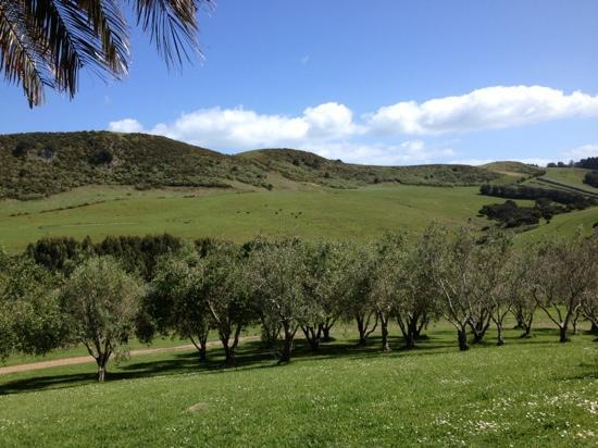 เกาะไวเฮเก, นิวซีแลนด์: view of the vineyard