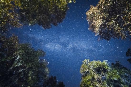Wakulla Springs, Flórida: The stars and milky way out back after the lights go out