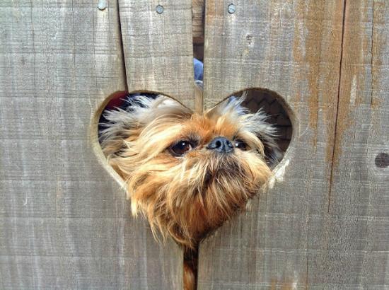 St. Orres: Doggie Friendly!