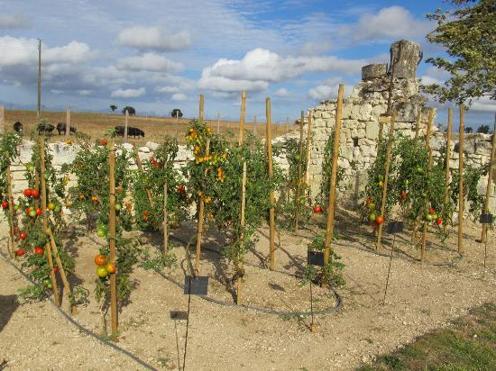Loire Valley Retreat: Jerome's garden (we had tomatoes from here at dinner!)