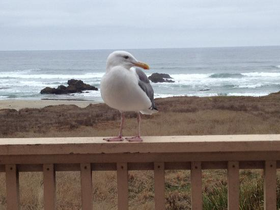 Ocean View Lodge: We had a visitor!