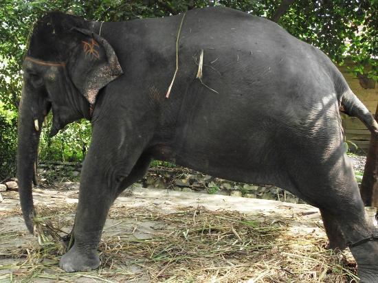 Jim Corbett National Park, India: Jumbo stretching for the safari!