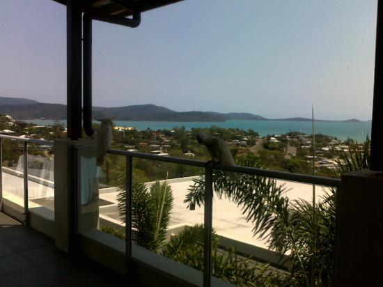 Whitsunday Reflections : The view as well