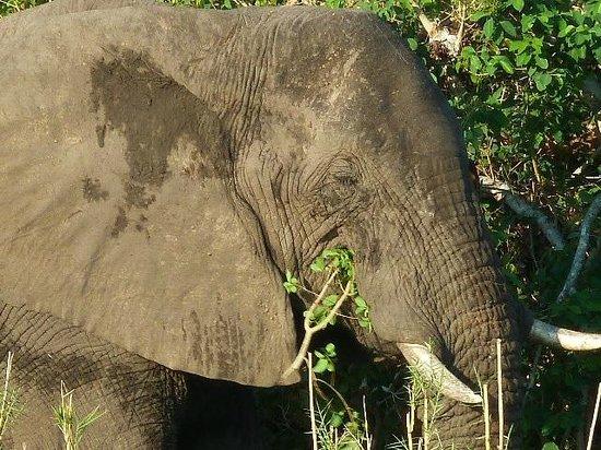 Mosi-oa-Tunya / Victoria Falls National Park : A 'local' on the banks of the Zambezi