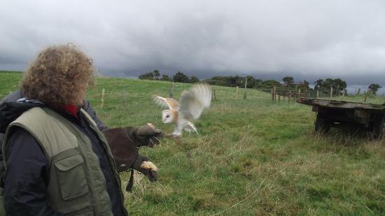 Newgrange Falconry: in flight