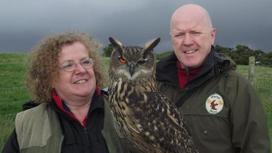 Newgrange Falconry: a winking European Eagle Owl
