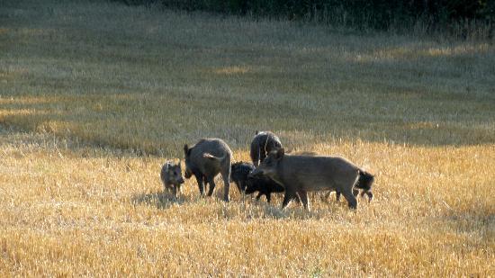 Agriturismo Villa Furlo: Visita a Sorpresa