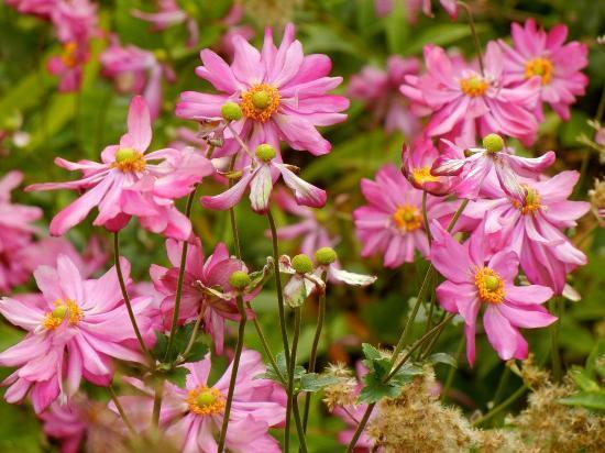 Smith Gilbert Gardens: Perennial garden