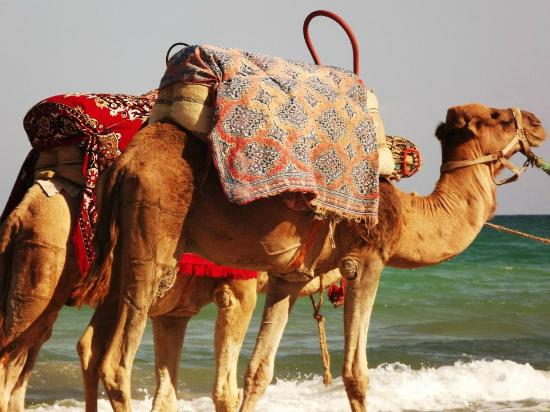 Club Iliade: cammelli spiaggia iliade