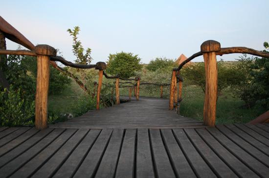 Amani Mara Lodge: Walkways to meal areas, more adventures and the pool