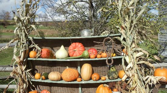 Willy's Farm and Cider Mill: colorful display