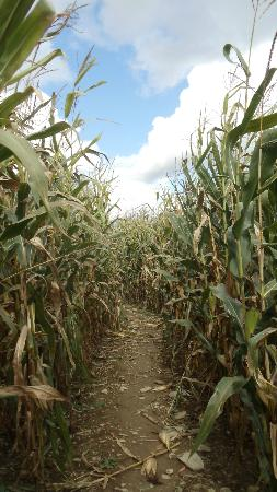 Willy's Farm and Cider Mill: The Corn Maze