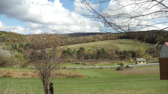 Willy's Farm and Cider Mill: view across the road from the corn maze