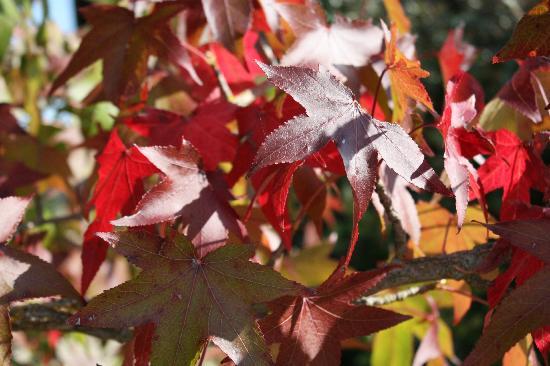 Le Clos de la Challangette : Fall colors on the farm