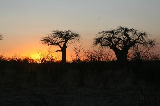 Chobe National Park, Botswana: Sundowners at the baobabs