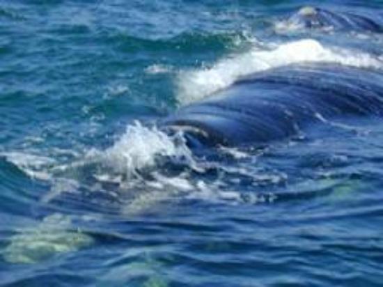 Ama-Krokka: Whales !!!!!!!!