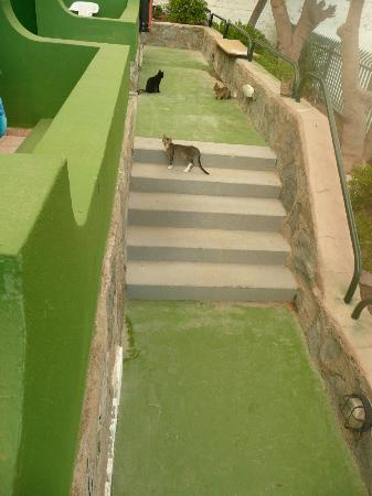 Servatur Canaima Apartments: cats just chillin out