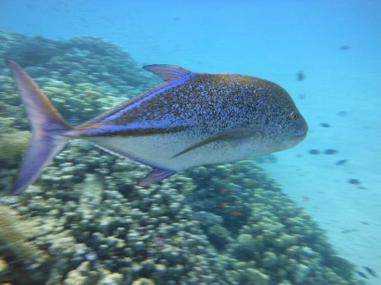 ฮิลตันมาซาอลัมนูเบียนรีสอร์ท: Best een grote vis
