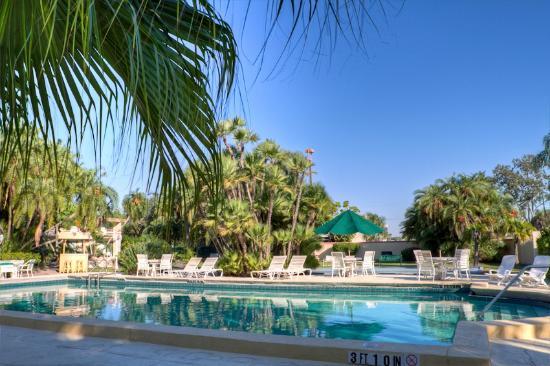 Golden Host Resort: 50 Feet Swimming Pool