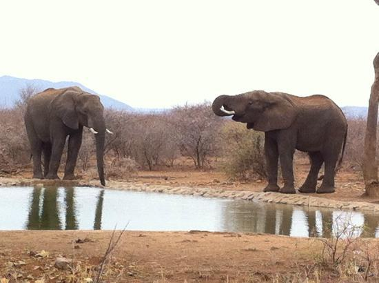 The Bush House : elephants at the watering hole