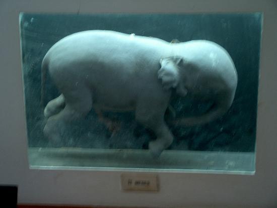 Natural History Museum: feto de elefante