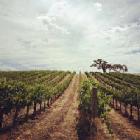 Stolpman Vineyards: getlstd_property_photo